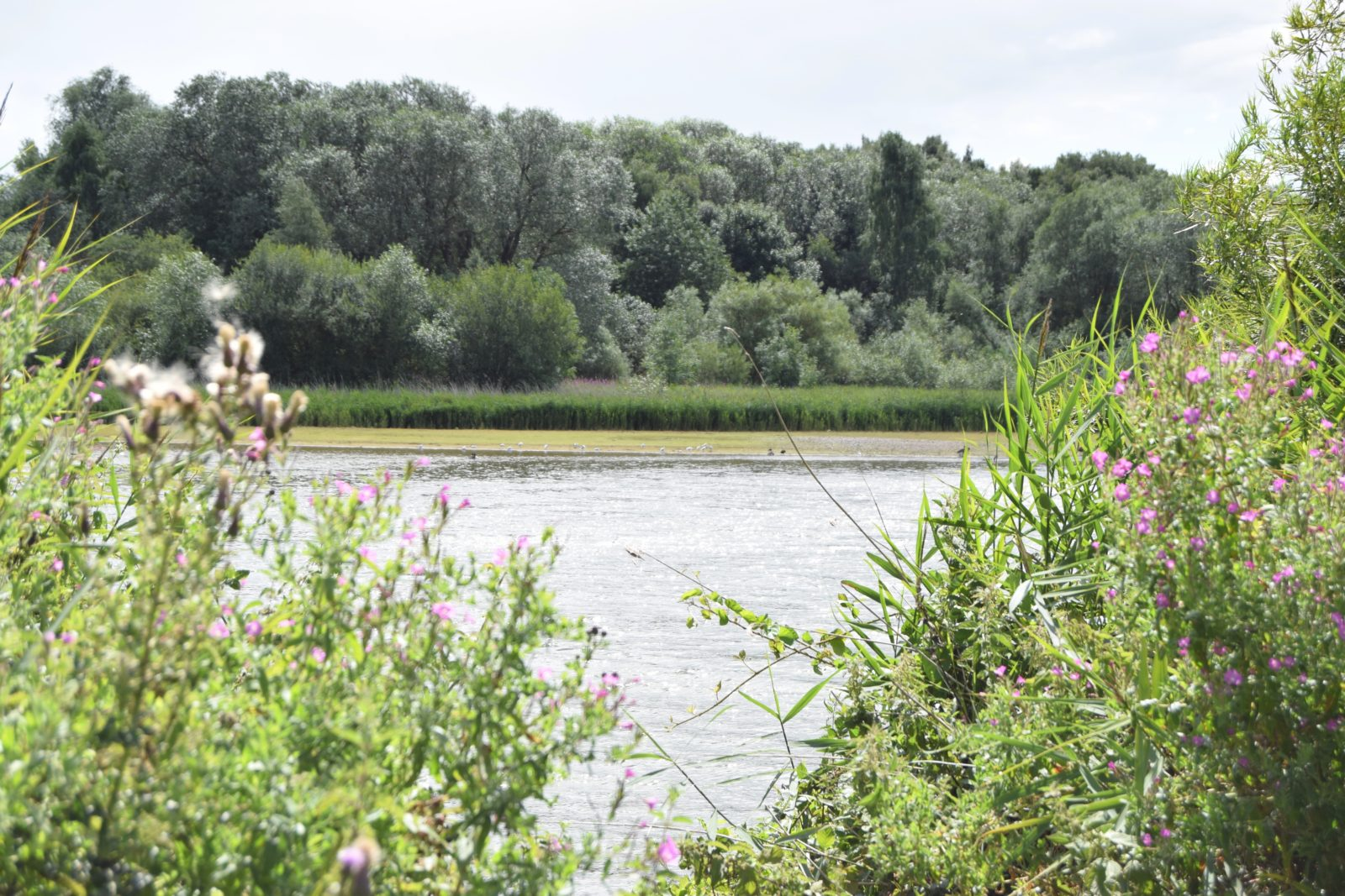 Branston Water Park Nature Reserve